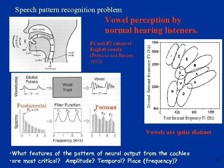 Speech pattern recognition problem Vowel perception by normal hearing listeners. F 1 and F