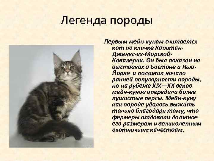 Легенда породы Первым мейн-куном считается кот по кличке Капитан. Дженкс-из-Морской. Кавалерии. Он был показан