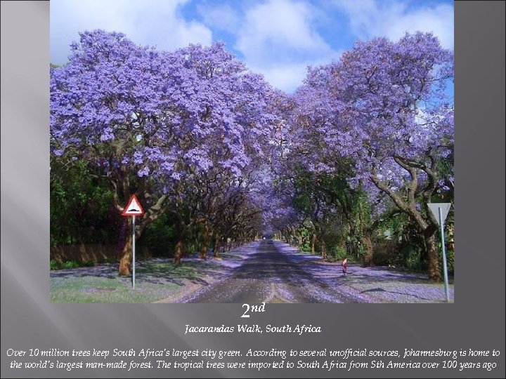 2 nd Jacarandas Walk, South Africa Over 10 million trees keep South Africa's largest