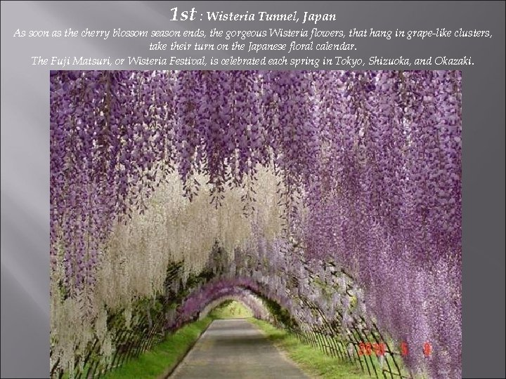 1 st : Wisteria Tunnel, Japan As soon as the cherry blossom season ends,