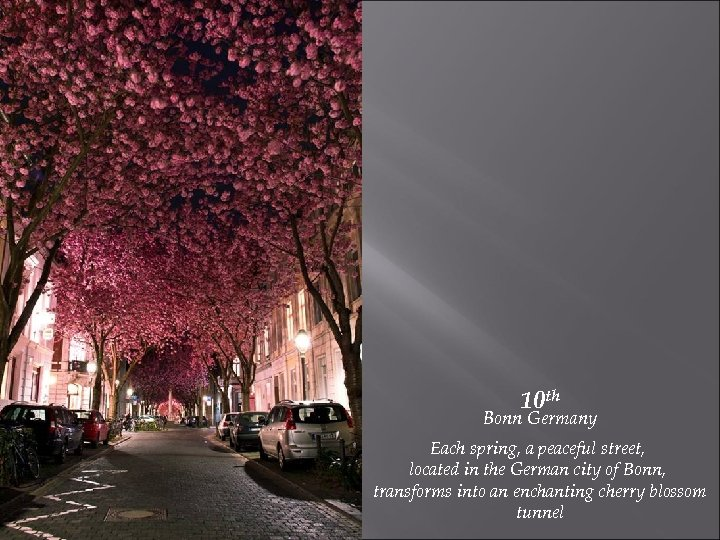 10 th Bonn Germany Each spring, a peaceful street, located in the German city