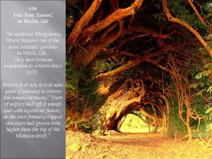 6 th Yew Tree Tunnel, in Wales, UK The medieval Aberglasney House features one