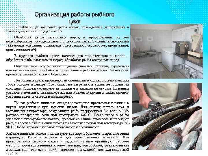 Организация работы рыбного цеха В рыбный цех поступает рыба живая, охлаждённая, мороженная и солёная,