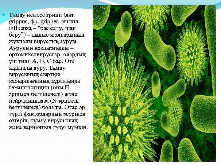 Тұмау немесе грипп (лат. grіppus, фр. grіpper, ағылш. influenza –