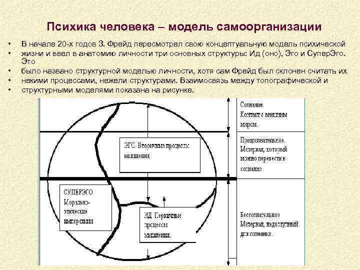 Психика человека – модель самоорганизации • • • В начале 20 -х годов З.