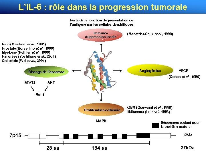 L'IL-6 : rôle dans la progression tumorale Perte de la fonction de présentation de