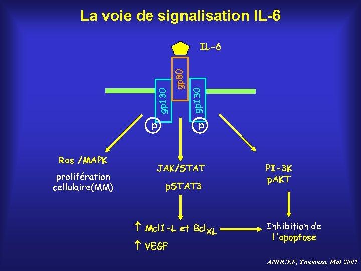 La voie de signalisation IL-6 p Ras /MAPK prolifération cellulaire(MM) gp 130 gp 80