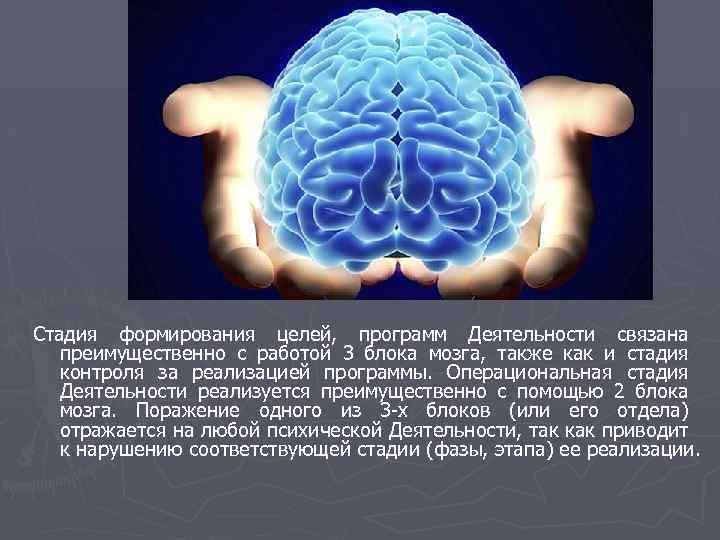 Стадия формирования целей, программ Деятельности связана преимущественно с работой 3 блока мозга, также как