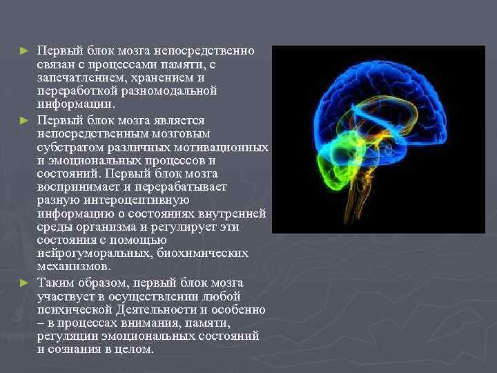 Первый блок мозга непосредственно связан с процессами памяти, с запечатлением, хранением и переработкой разномодальной