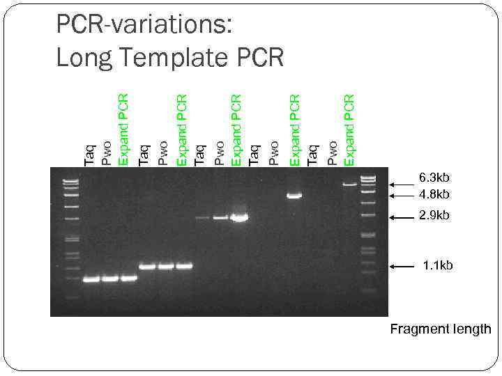 Pwo Expand PCR Taq Pwo Expand PCR Taq Taq Pwo Expand PCR-variations: Long Template