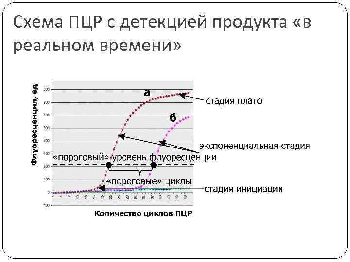 Схема ПЦР с детекцией продукта «в реальном времени»