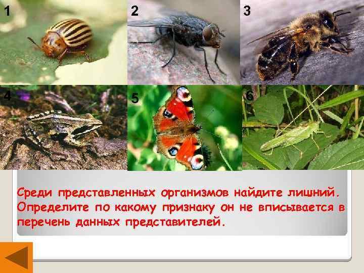 1 2 3 4 5 6 Среди представленных организмов найдите лишний. Определите по какому