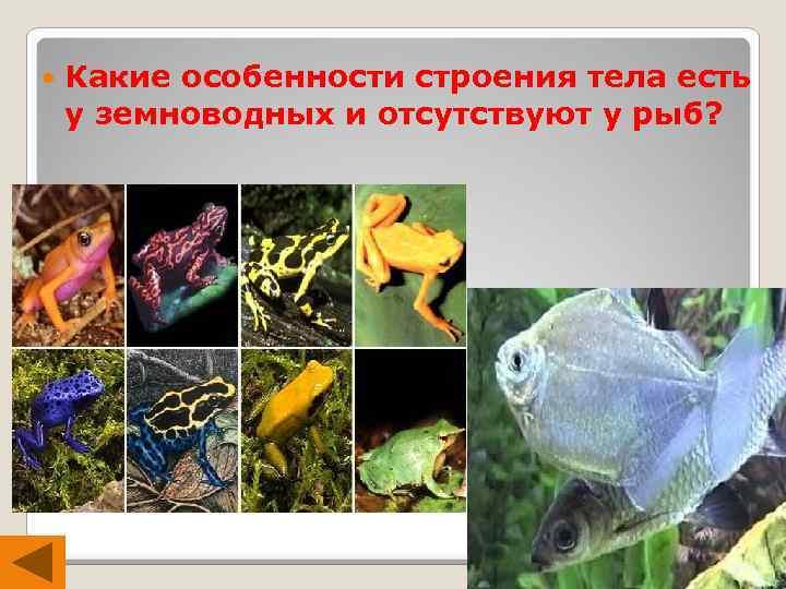 Какие особенности строения тела есть у земноводных и отсутствуют у рыб?