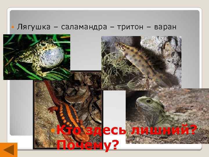Лягушка – саламандра – тритон – варан 1 Кто здесь лишний? Почему?