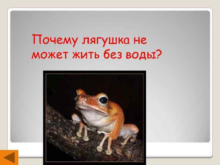 Почему лягушка не может жить без воды?