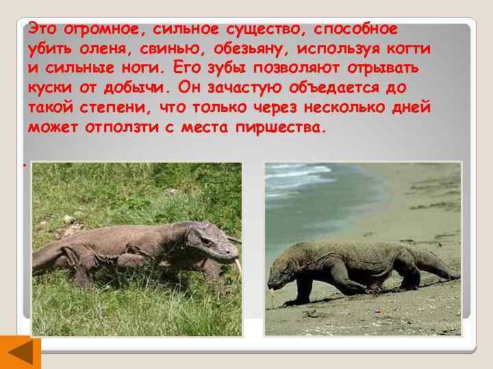 Это огромное, сильное существо, способное убить оленя, свинью, обезьяну, используя когти и сильные ноги.