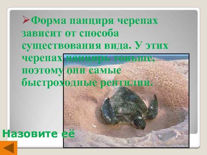 ØФорма панциря черепах зависит от способа существования вида. У этих черепах панцирь тоньше, поэтому
