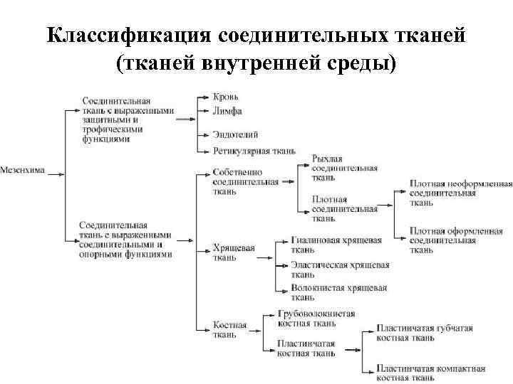 Классификация соединительных тканей (тканей внутренней среды)