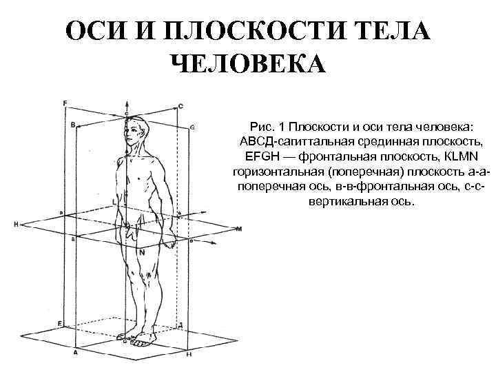 ОСИ И ПЛОСКОСТИ ТЕЛА ЧЕЛОВЕКА Рис. 1 Плоскости и оси тела человека: АВСД-сагиттальная срединная