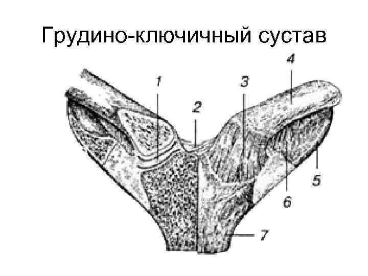 Грудино-ключичный сустав