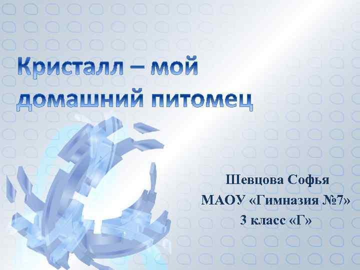 Шевцова Софья МАОУ «Гимназия № 7» 3 класс «Г»