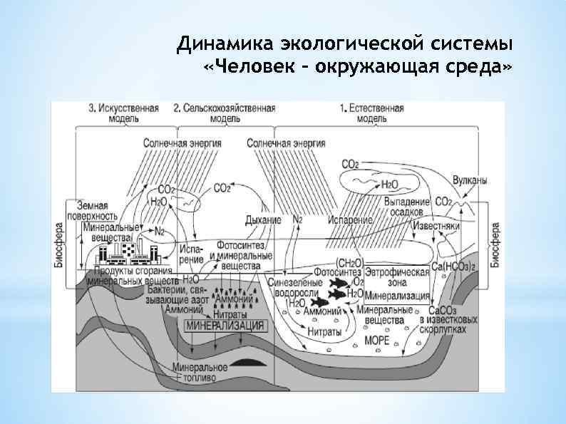 Динамика экологической системы «Человек - окружающая среда»