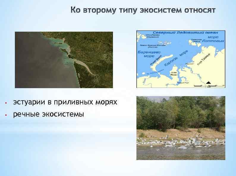 § эстуарии в приливных морях § речные экосистемы