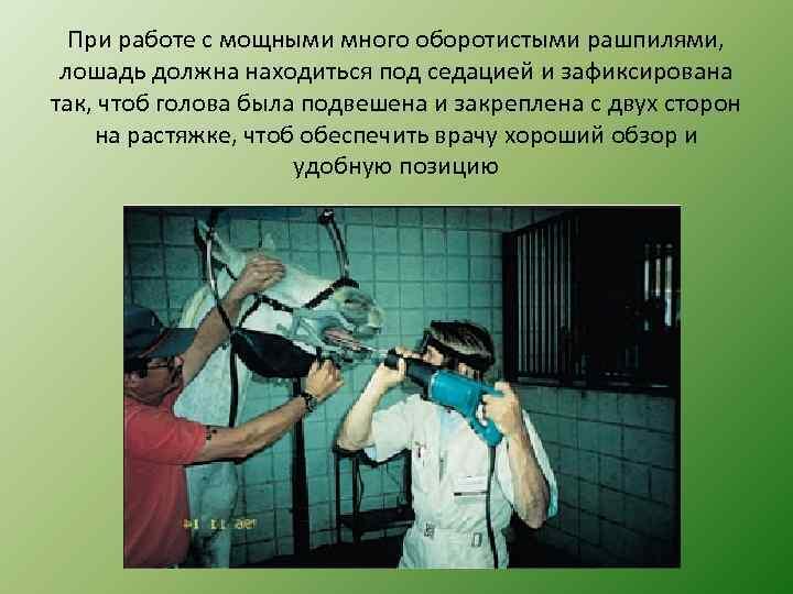 При работе с мощными много оборотистыми рашпилями, лошадь должна находиться под седацией и зафиксирована