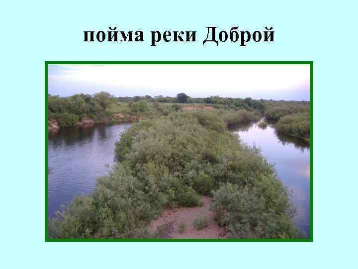 пойма реки Доброй