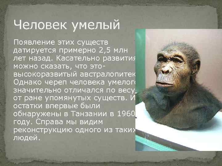 Человек умелый Появление этих существ датируется примерно 2, 5 млн лет назад. Касательно развития