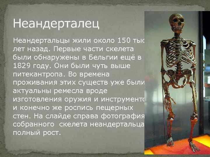 Неандерталец Неандертальцы жили около 150 тыс лет назад. Первые части скелета были обнаружены в