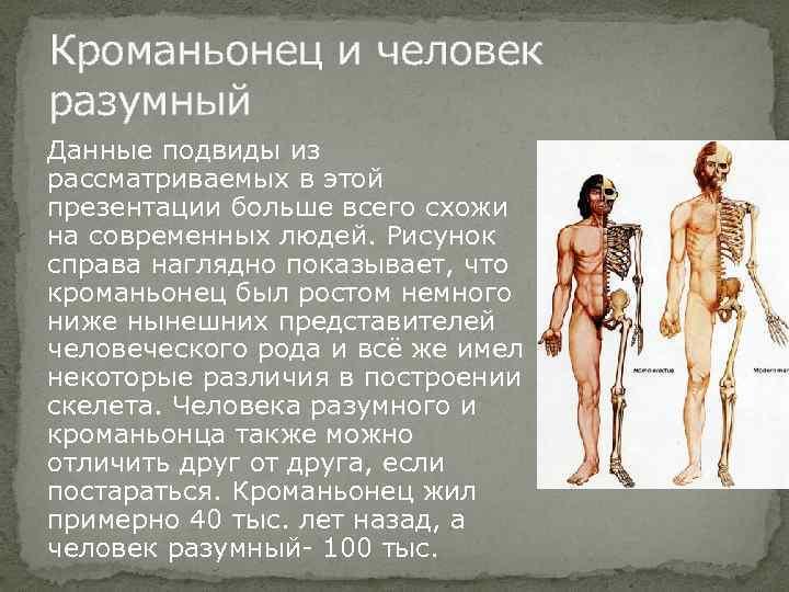 Кроманьонец и человек разумный Данные подвиды из рассматриваемых в этой презентации больше всего схожи