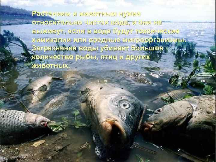 Растениям и животным нужна относительно чистая вода, и они не выживут, если в воде