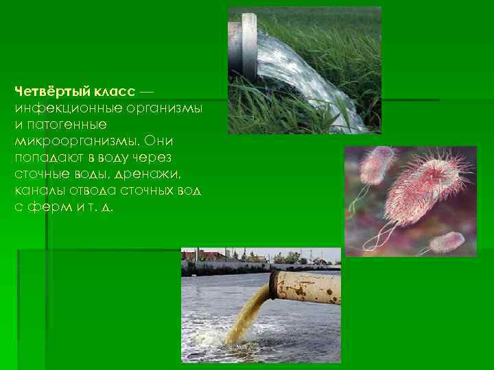 Четвёртый класс — инфекционные организмы и патогенные микроорганизмы. Они попадают в воду через сточные