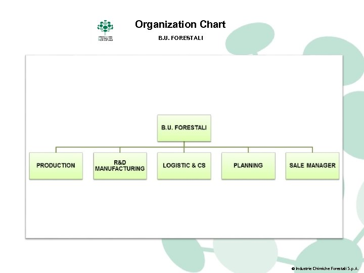 Organization Chart B. U. FORESTALI © Industrie Chimiche Forestali S. p. A.