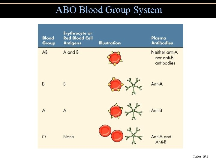 ABO Blood Group System Table 19. 2