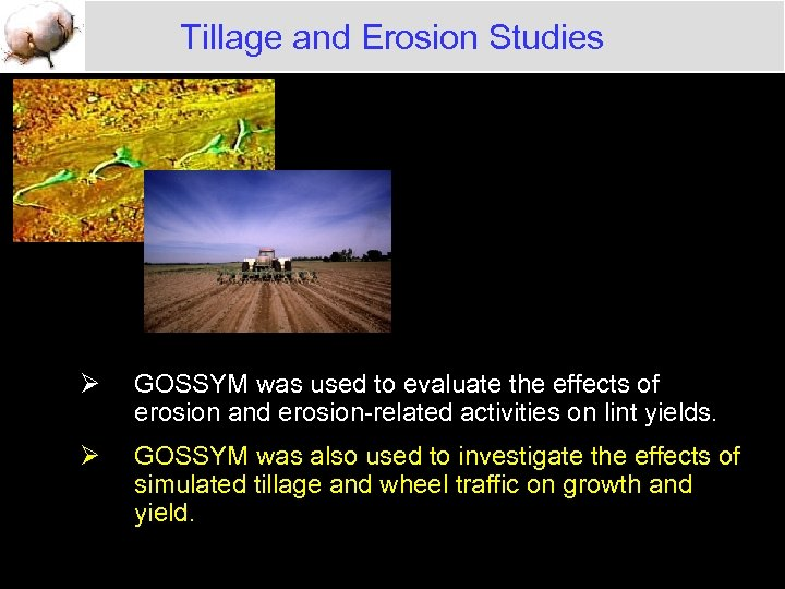 Tillage and Erosion Studies Ø GOSSYM was used to evaluate the effects of erosion