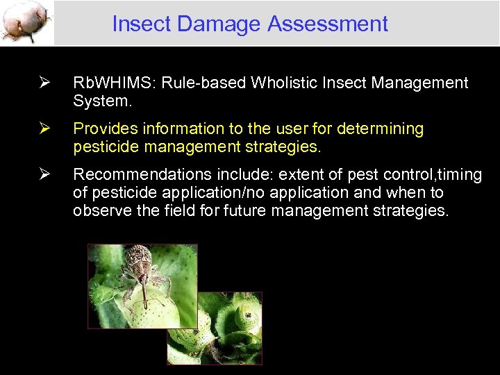 Insect Damage Assessment Ø Rb. WHIMS: Rule-based Wholistic Insect Management System. Ø Provides information