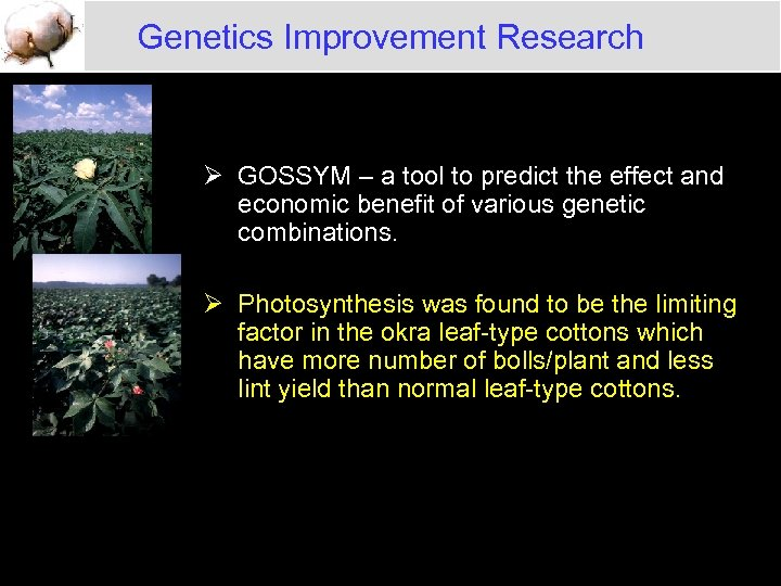 Genetics Improvement Research Ø GOSSYM – a tool to predict the effect and economic