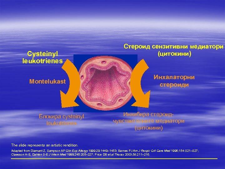 Cysteinyl leukotrienes Montelukast Блокира cysteinyl leukotrienes Стероид сензитивни медиатори (цитокини) Инхалаторни стероиди Инхибира стероидчувствителните