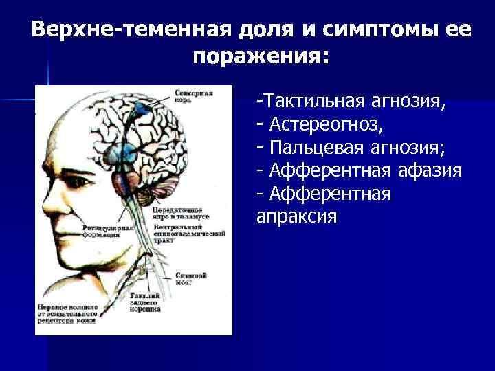 Верхне-теменная доля и симптомы ее поражения: -Тактильная агнозия, - Астереогноз, - Пальцевая агнозия; -