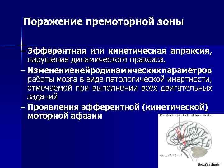 Поражение премоторной зоны – Эфферентная или кинетическая апраксия, нарушение динамического праксиса. – Изменение нейродинамических