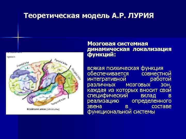 Теоретическая модель А. Р. ЛУРИЯ Мозговая системная динамическая локализация функций: всякая психическая функция обеспечивается