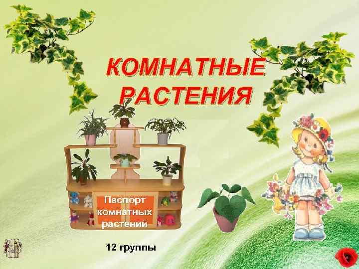 комнатные растения для старшей группы картинки необходимой для