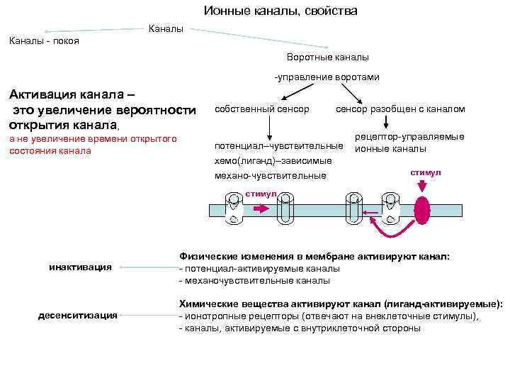 Ионные каналы, свойства Каналы - покоя Воротные каналы -управление воротами Активация канала – это