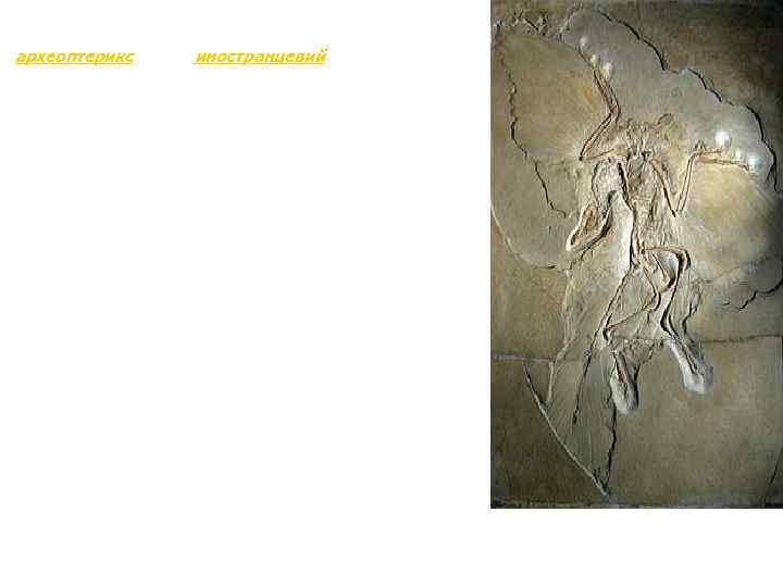 Қазындылардан ең мәлім өтпелі формалар - көнеқұс (археоптерикс) және иностранцевий. Көнеқұс (археоптрикс) - жартылай