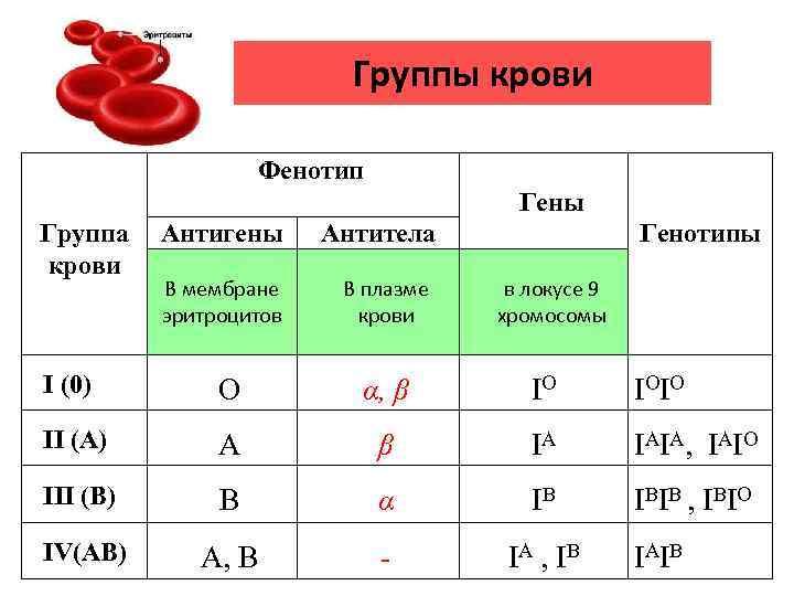 Группы крови Фенотип Гены Группа крови Генотипы Антигены Антитела В мембране эритроцитов В плазме