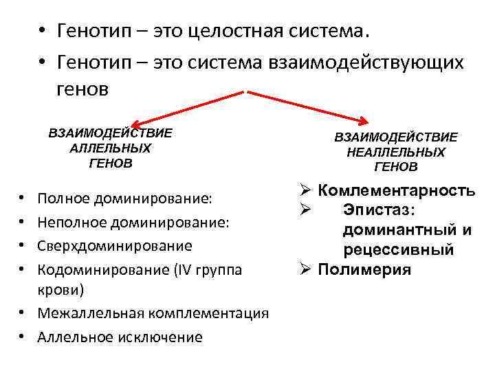 • Генотип – это целостная система. • Генотип – это система взаимодействующих генов