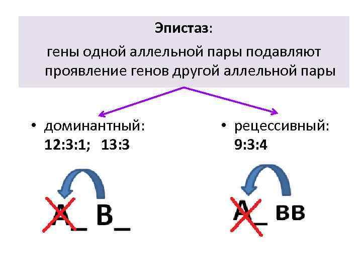 Эпистаз: гены одной аллельной пары подавляют проявление генов другой аллельной пары • доминантный: 12: