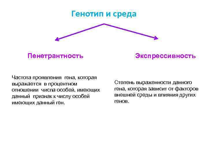 Генотип и среда Пенетрантность Частота проявления гена, которая выражается в процентном отношении числа особей,